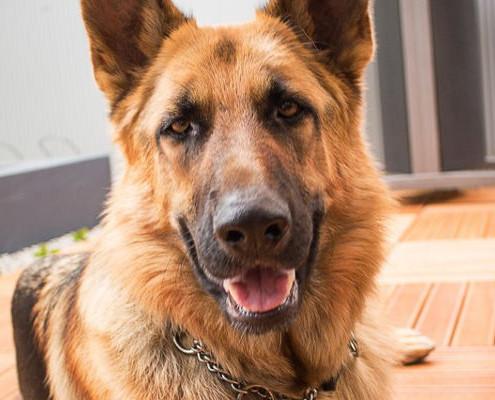 Piani prevenzione per cane senior