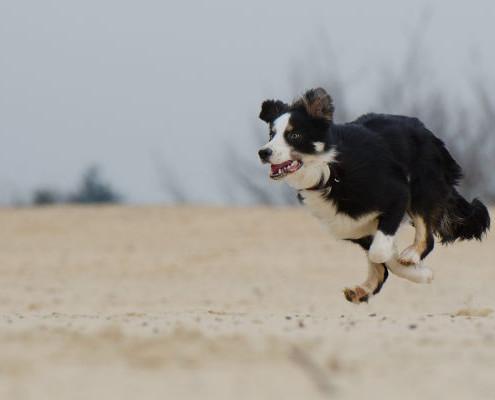 Prevenzione ortopedico cane